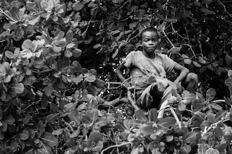 Boy on a Cashew Tree, Mnazi Bay.