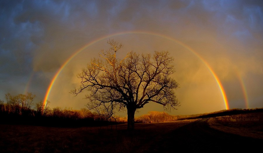 Rainbow-Renewal.jpg