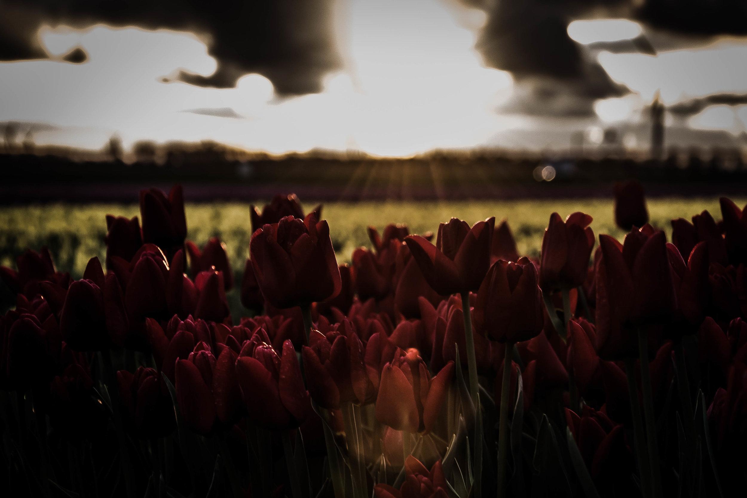 best flower 4.jpg