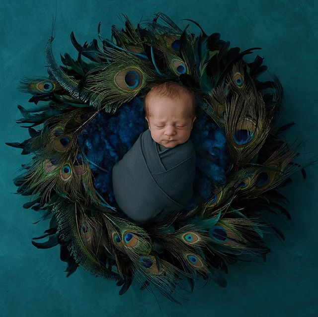 Mama requested this peacock wreath, was only too happy to oblige #newbornphotography #rotoruaphotographer #rotoruababies #rotoruaparents #rotoruanewbornphotographer #newborncompositebackgrounds #luisadunndigitalbackdrop #bayofplentyphotographer #photooftheday