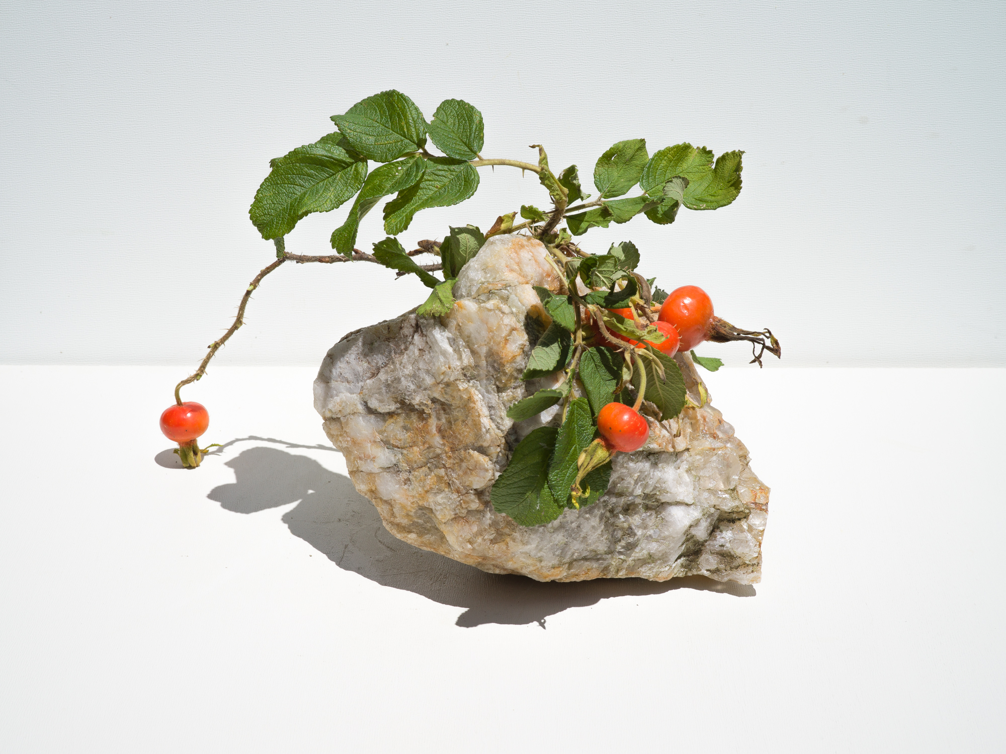 Rose Hip with Quartz, 2018  Signed on verso chromogenic dye coupler print 30 x 30 inches Edition of 3 + 1AP 48 x 48 inches Edition of 3 + 1AP