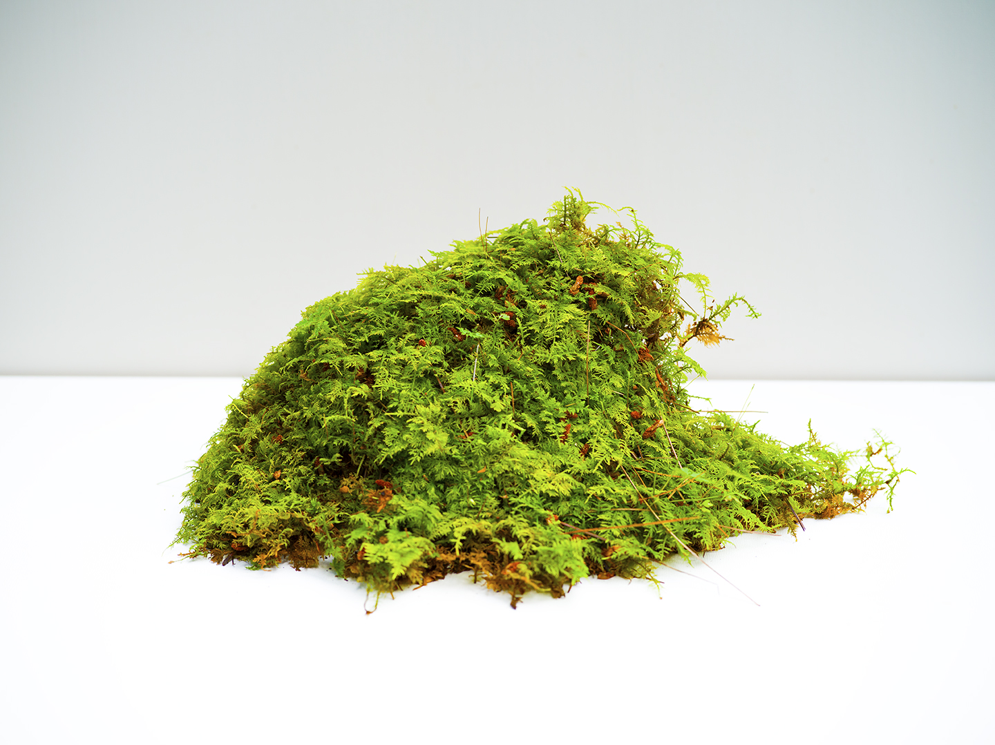 Moss pushed into the forest by heavy rain.