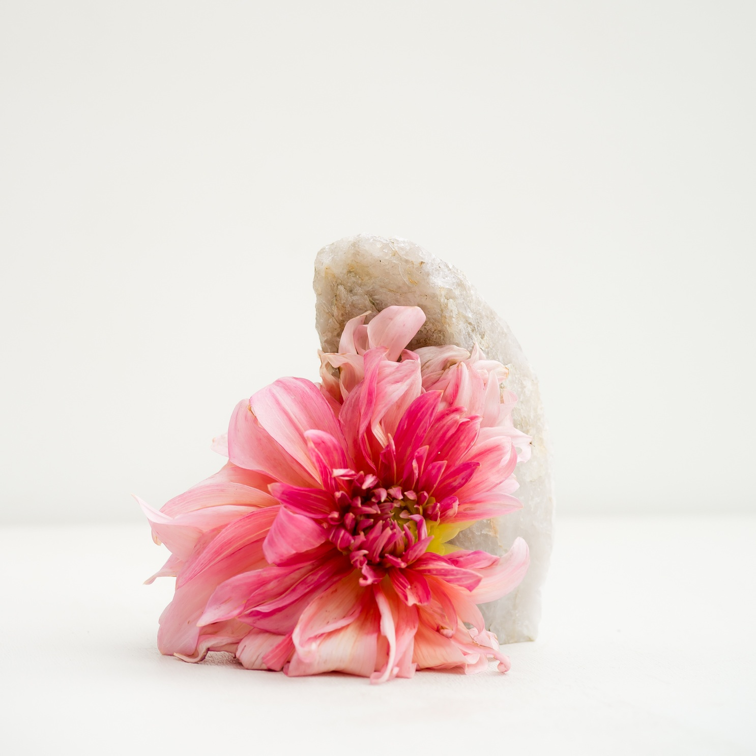Prettiest Pink. Dahlia, 2018  Signed on verso chromogenic dye coupler print 30 x 30 inches Edition of 3 + 1AP 48 x 48 inches Edition of 3 + 1AP