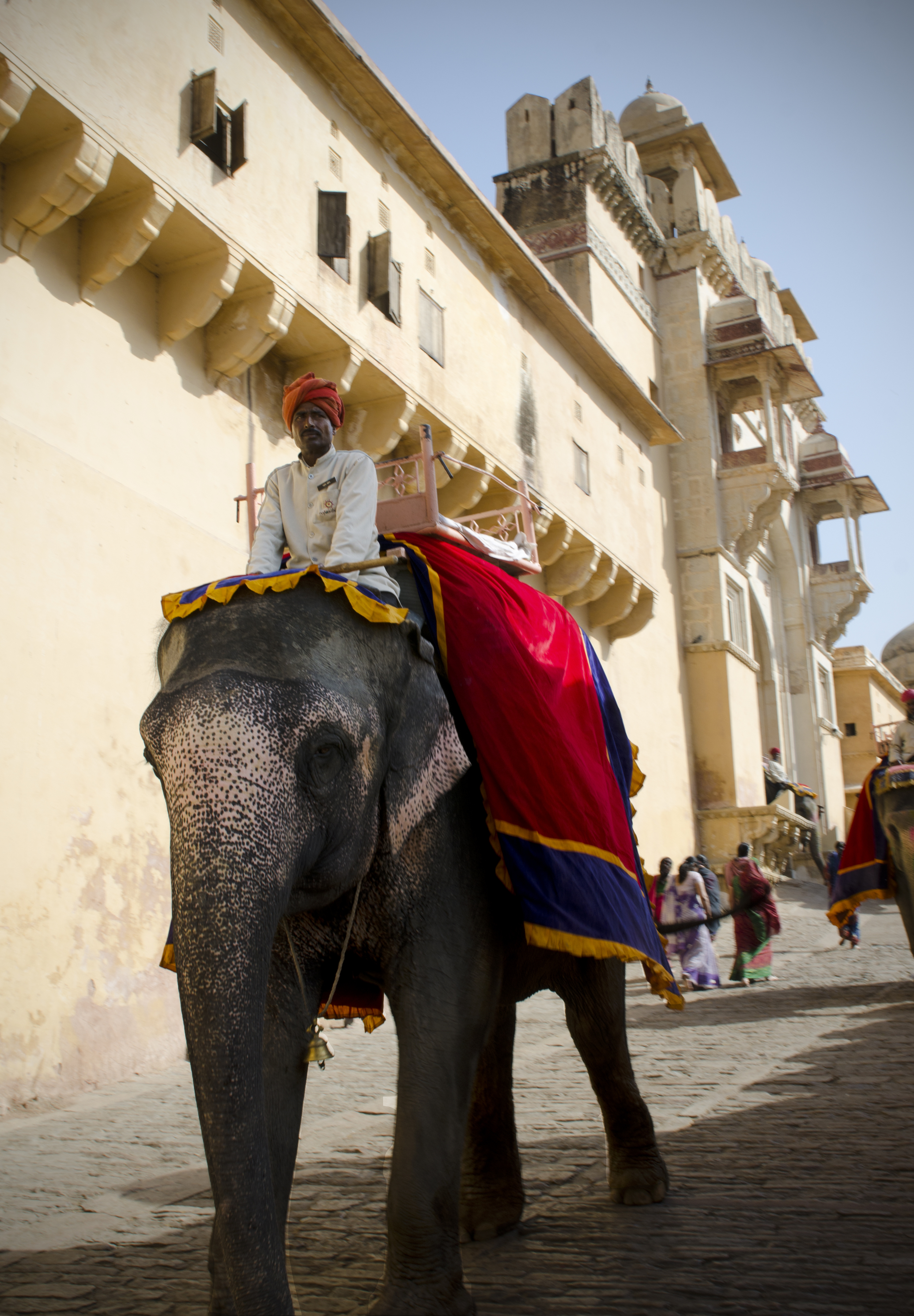 Elephants carrying people up and down to the Amber Palace