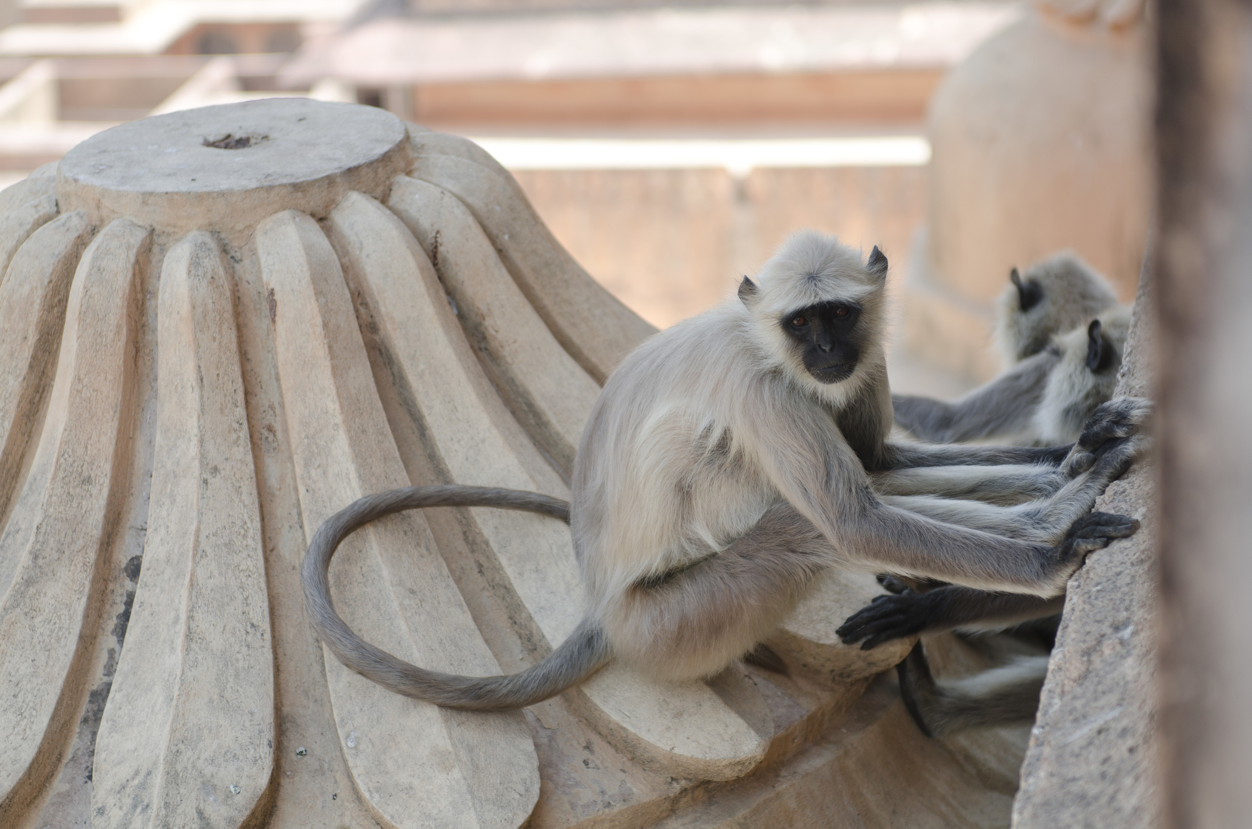 There were so many monkeys scampering around