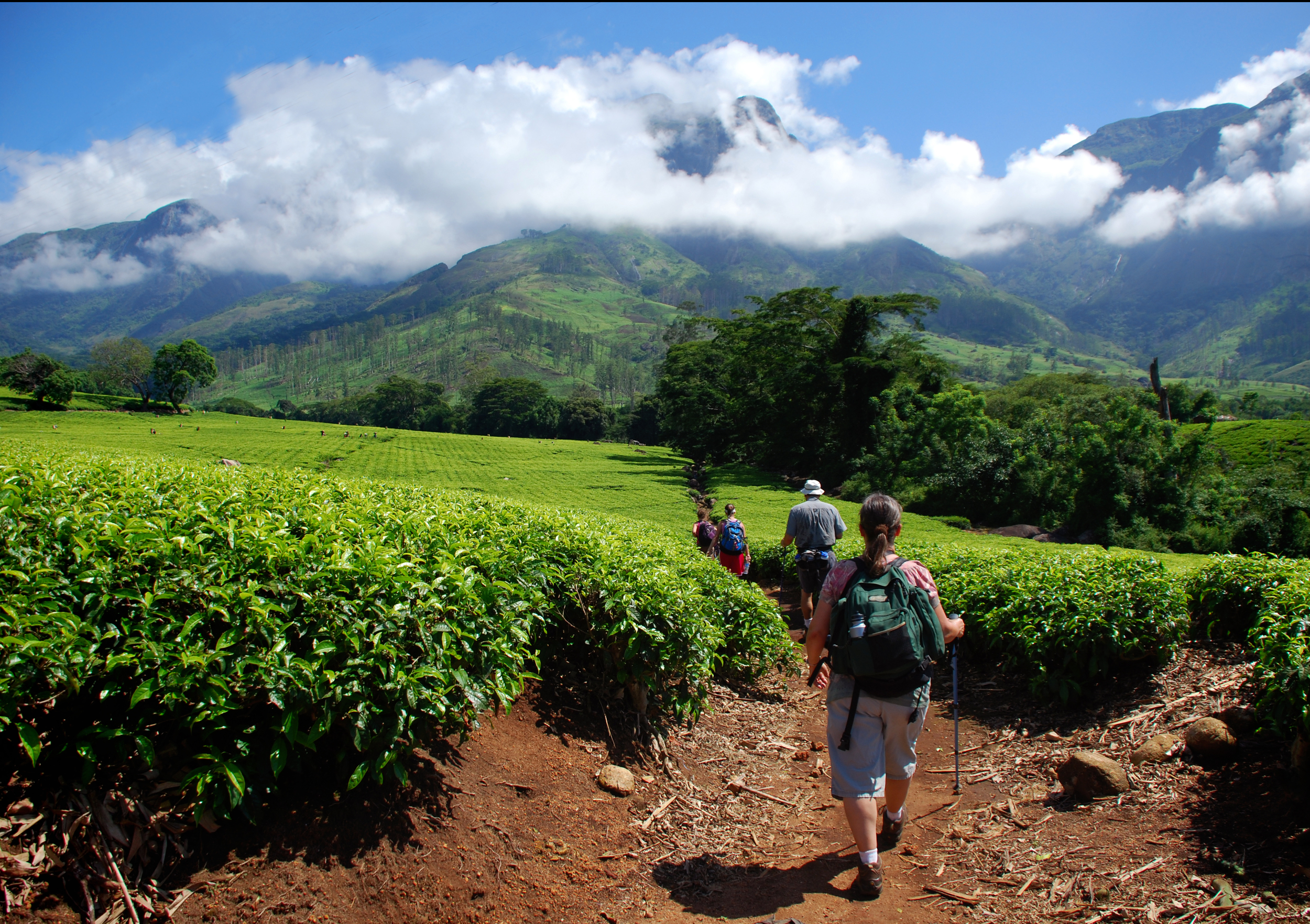Starting our climb from the tea fields in the valley