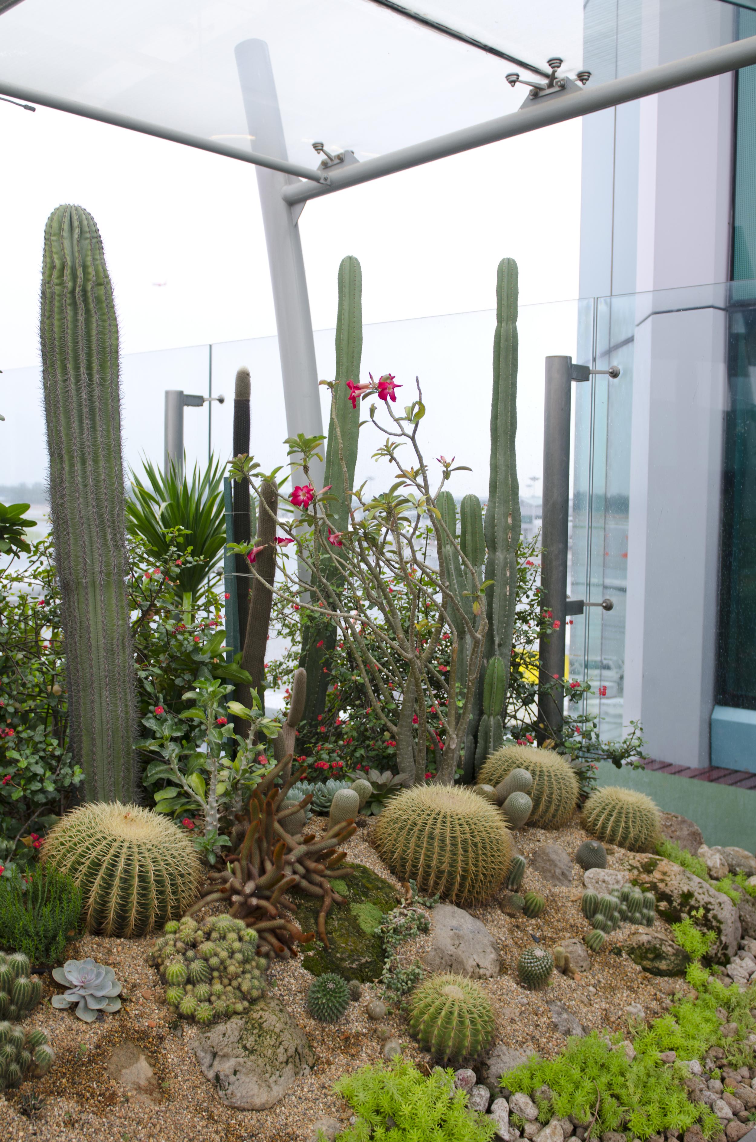 Up in the rooftop cactus garden