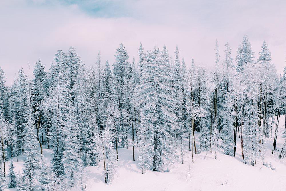 The Far & Near, Dulci Edge Aspen Travel Guide