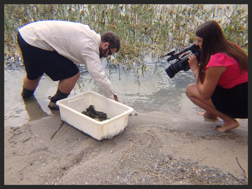 Releasing hatchling Murray Short-Necked Turtles ( Emydura macquarii ) at Lake Bonney while being filmed for ABC. Photo by Dr Ricky Spencer