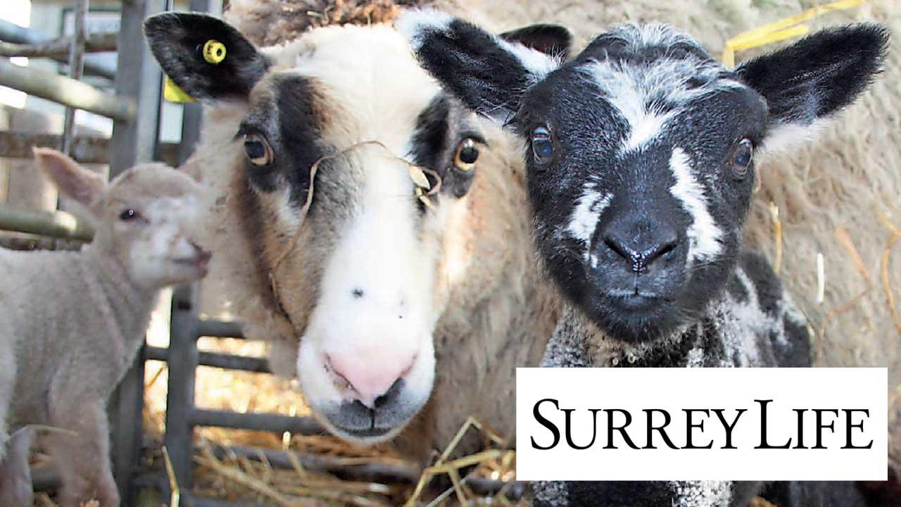 SurreyLife-May17