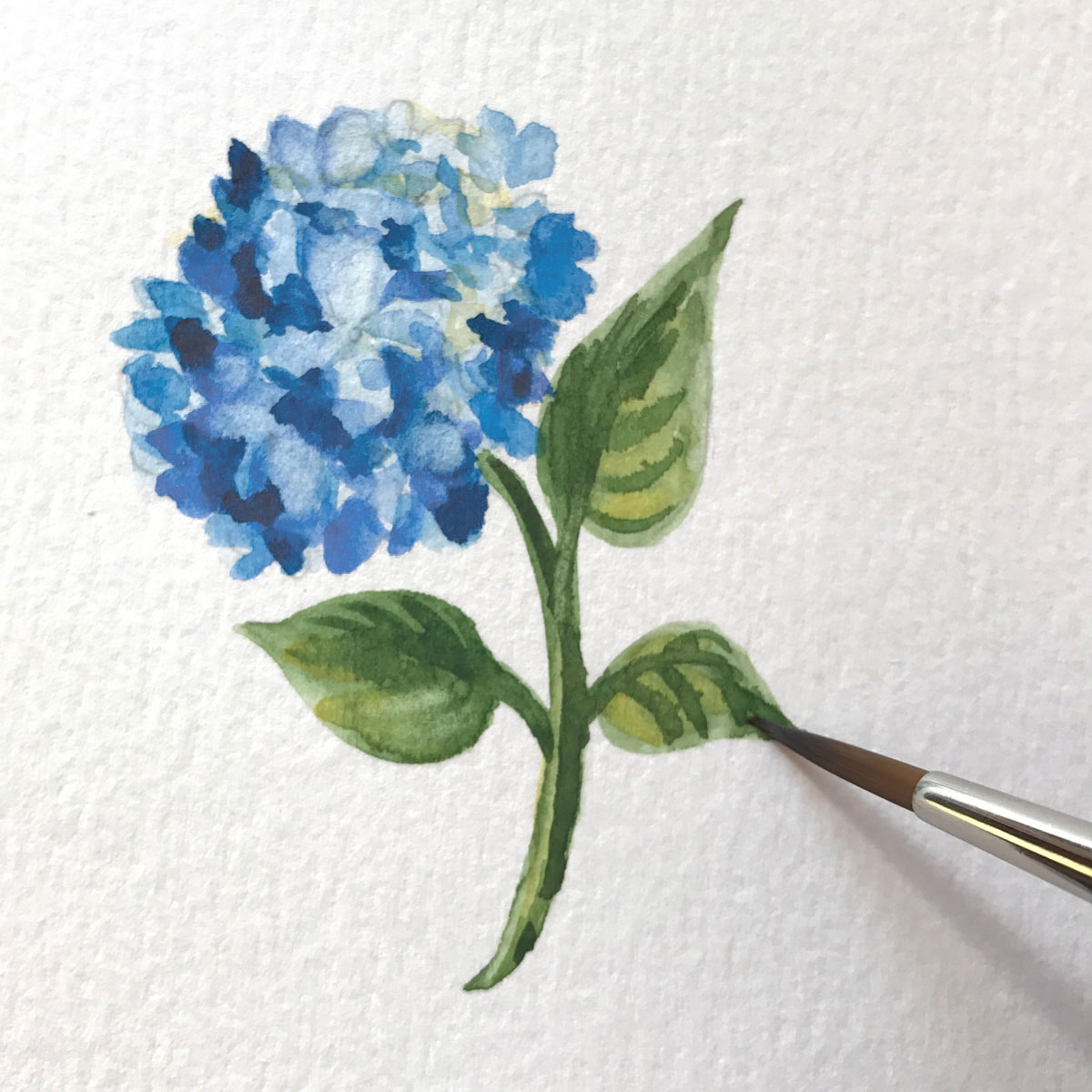 It's all in the details. Blue hydrangea stem painted by Michelle Mospens (   Mospens Studio   ) for our reply card motif.