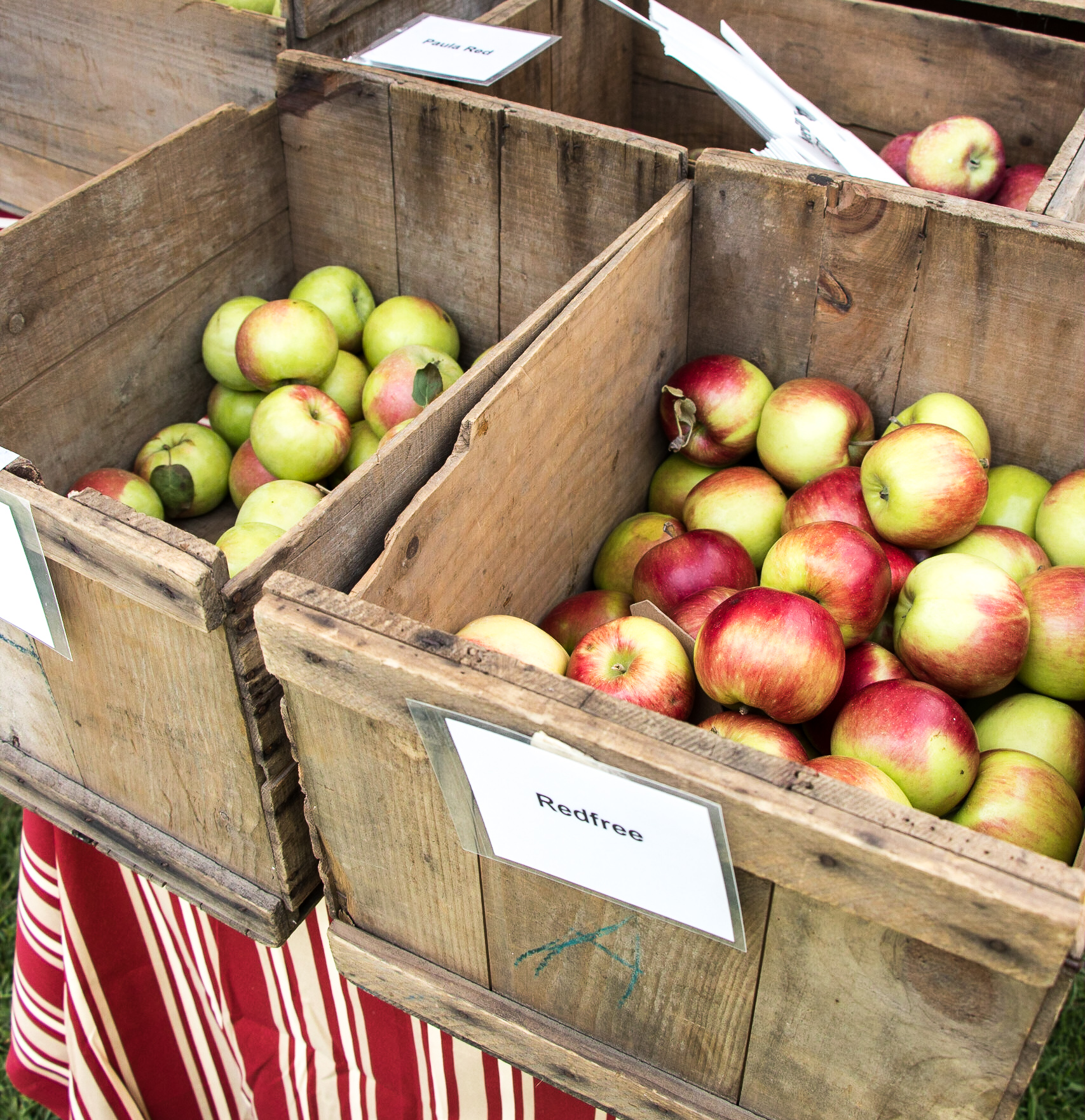 September: Harvest Season at the Local Farms