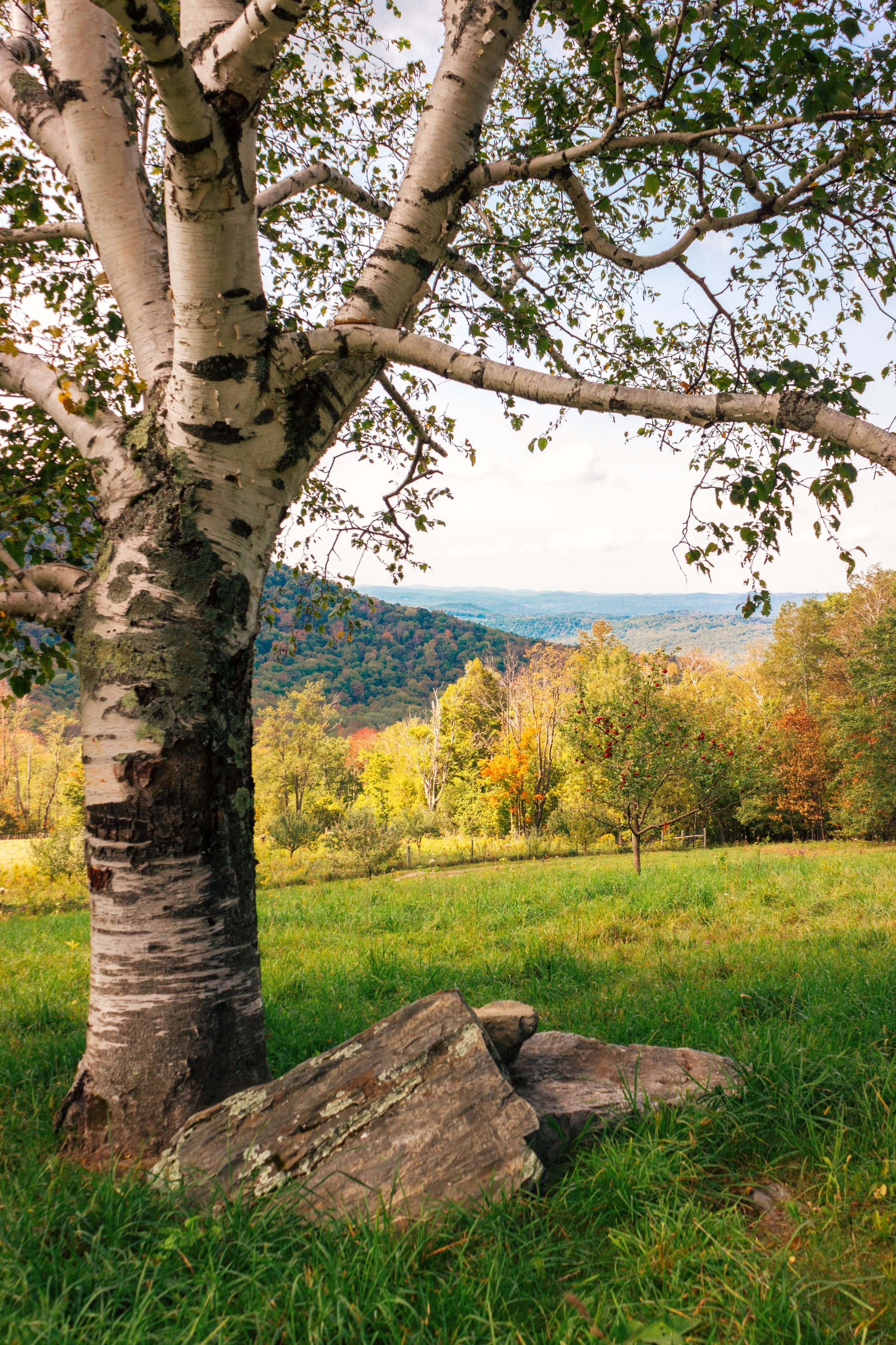 Merck Forest's perfect picnic spot.