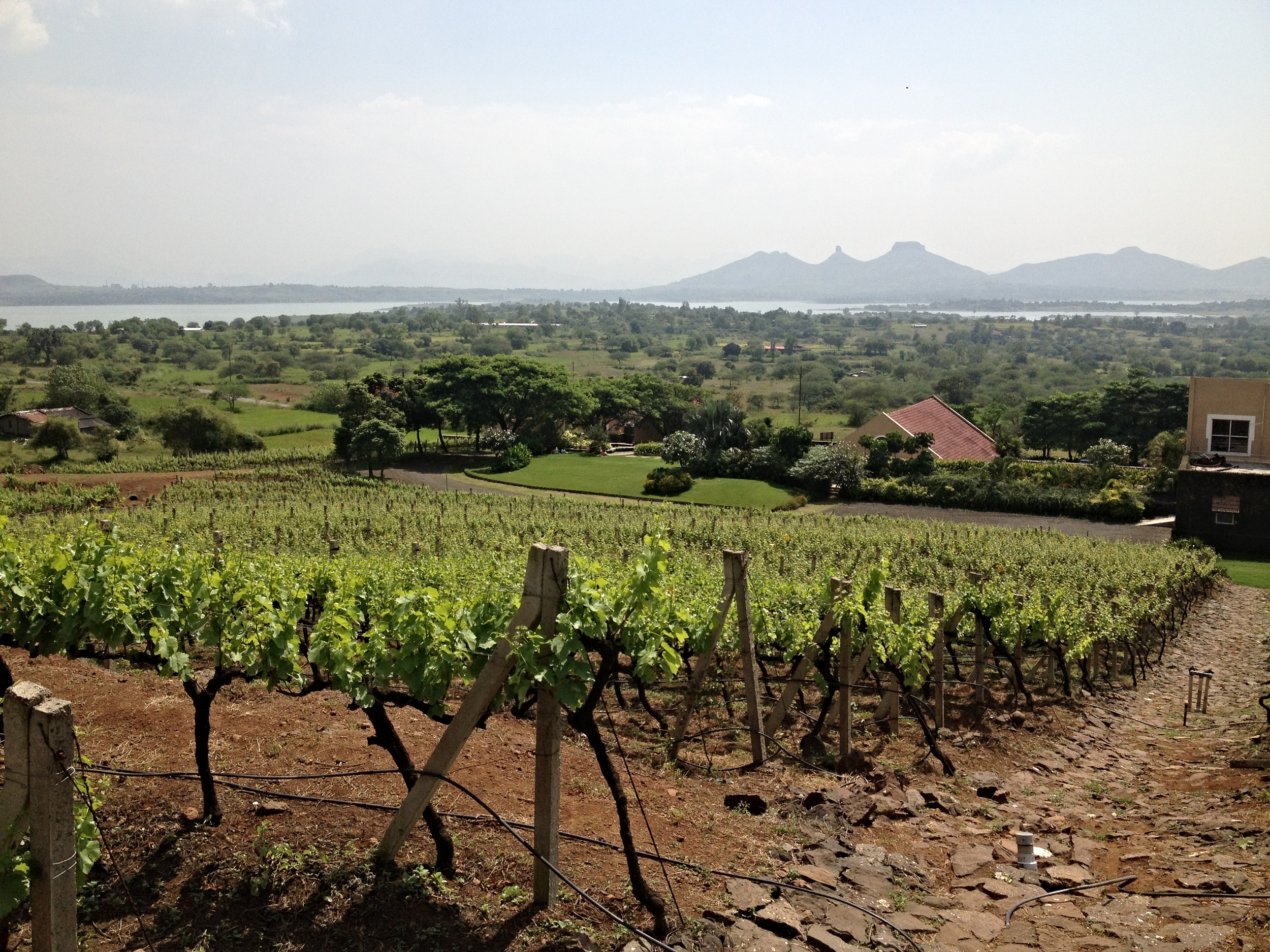 View from Grover Zampa's vineyard