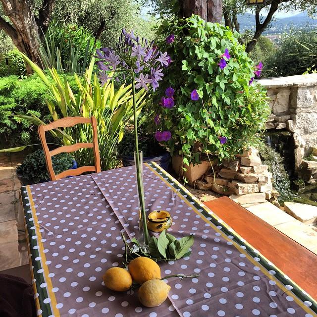 Lemons from my trees 🍋🍋🍋 I love nature 😍 #joellembc1 #lemon #tree #HomefromHome #southoffrance #familyfirst