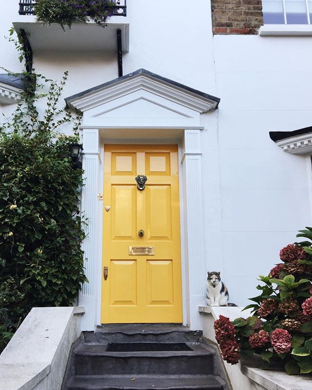 Grumpy kitties & yellow doors in Hampstead, spotted well before the snow #ihavethisthingwithdoors