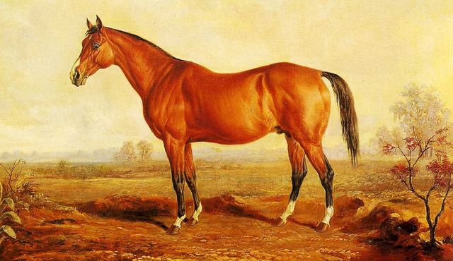"""The famous """"Lexington"""", who apparently sired Mabry's horse, """"Helmet""""."""