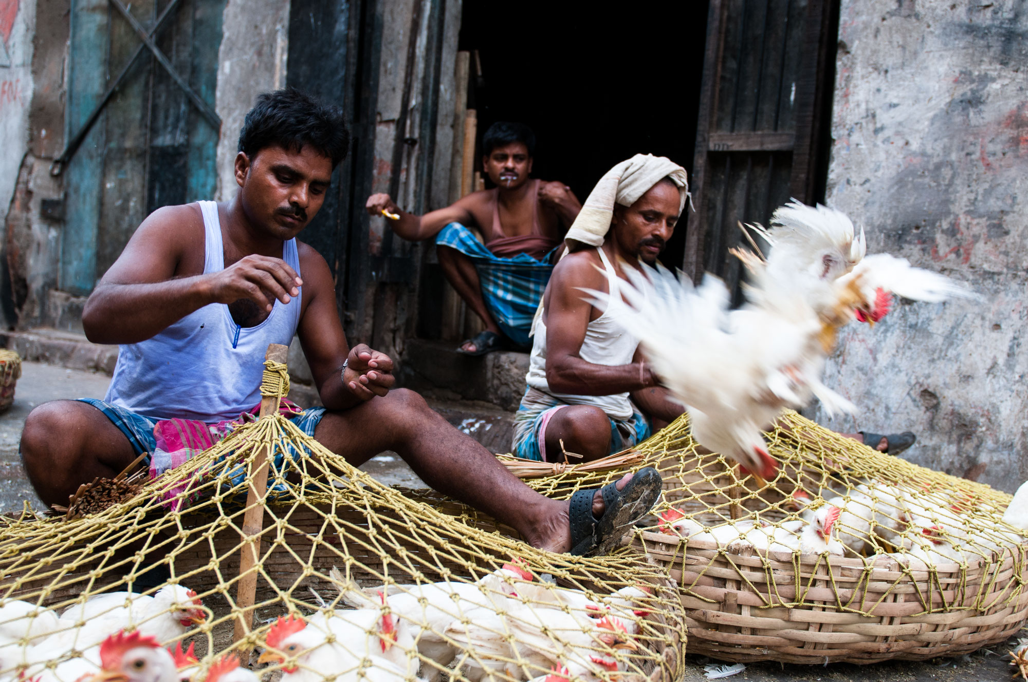New Market Kolkata India slaughterhouse | laborers sort chickens for weight and size for the local market.