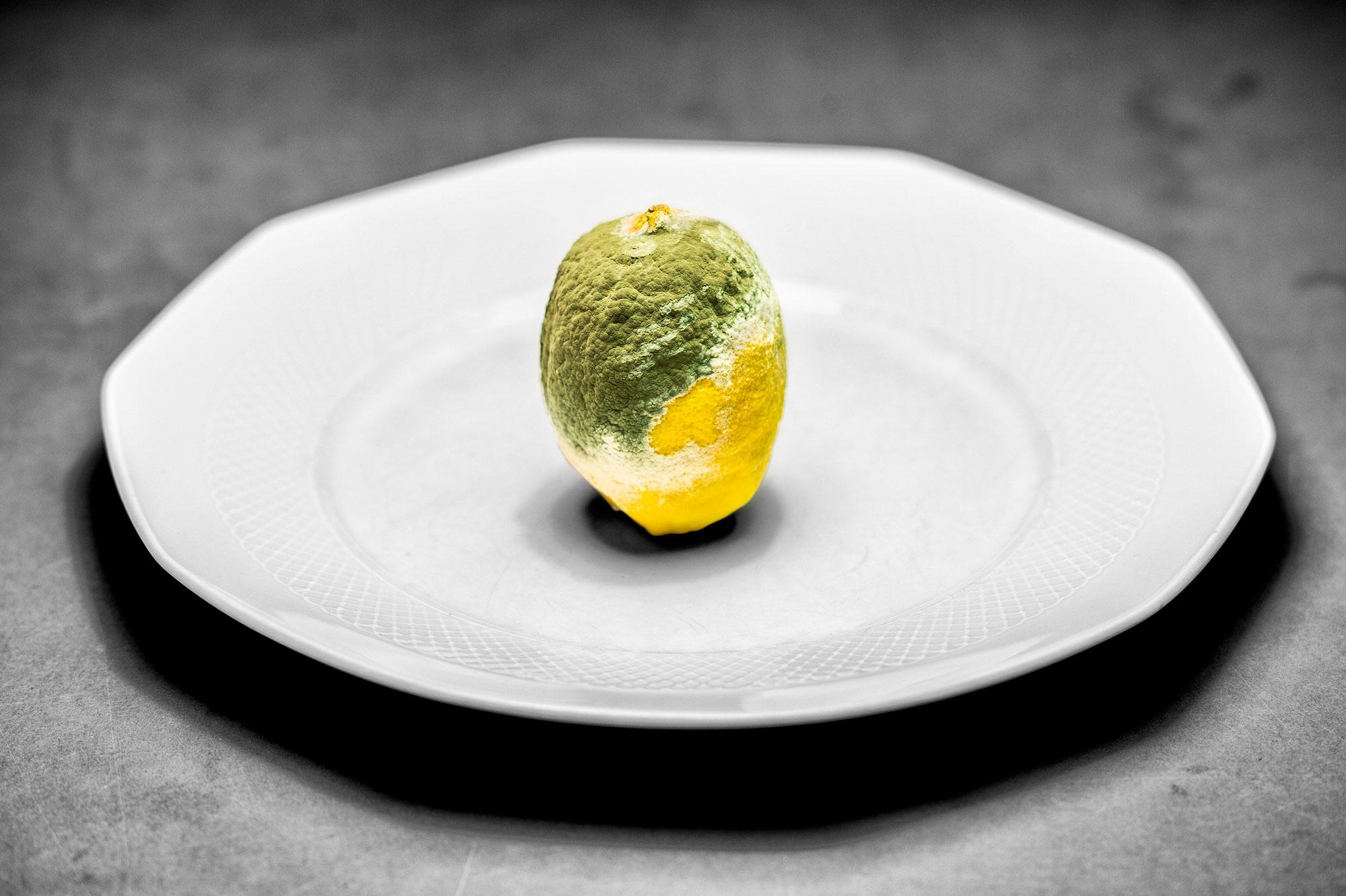 citrus × limon 1