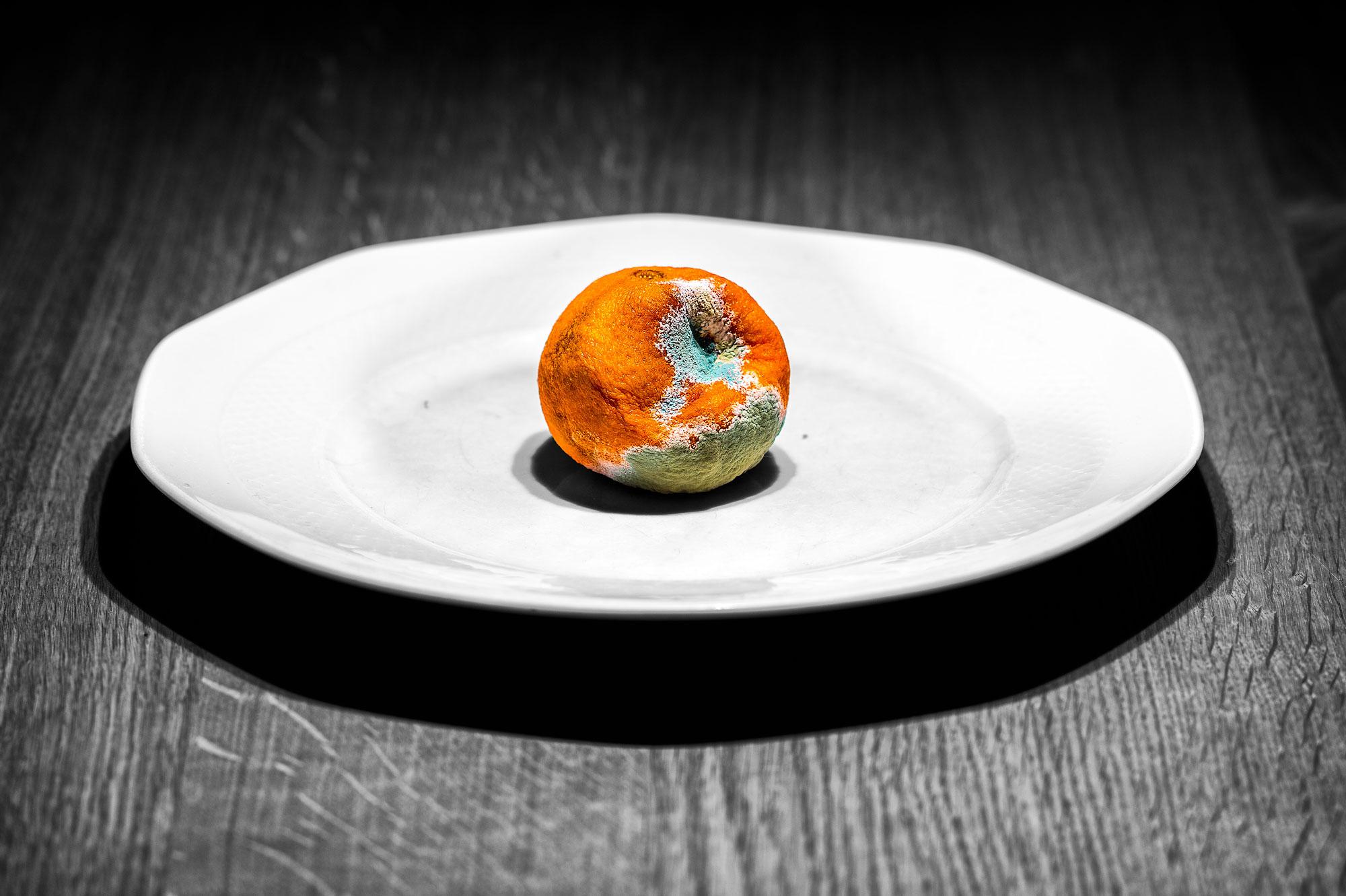 Citrus reticulata 3