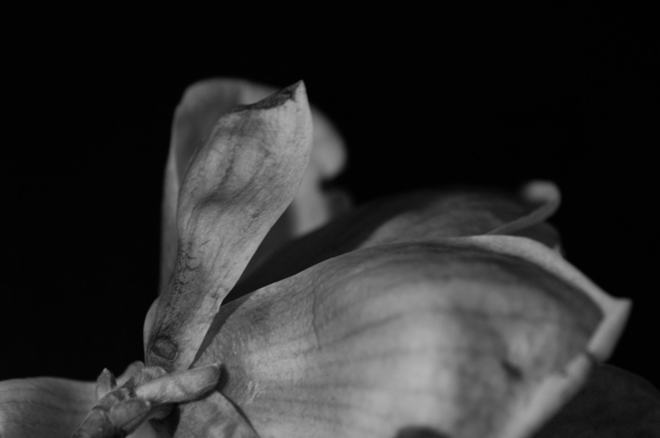 Magnolia - 42.jpg