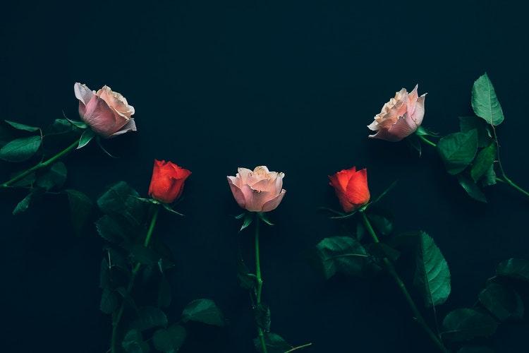 Rose Ritual.jpeg