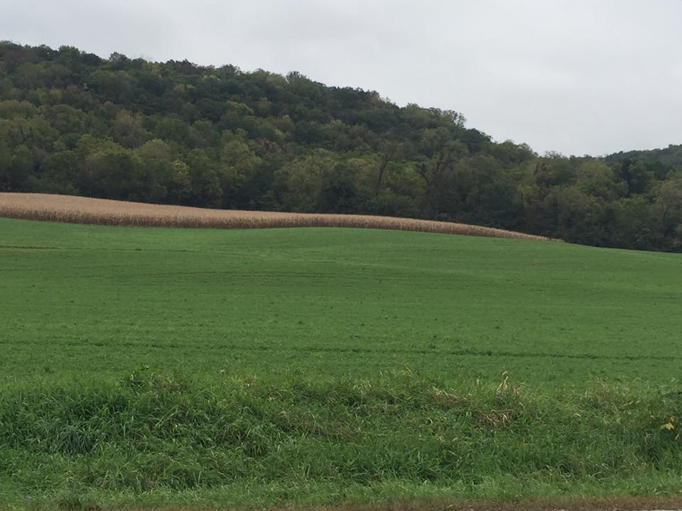 Hills on one side of the road and the flooding river on the other. Peaceful rolling hills of green and ocher.