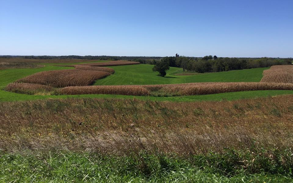 The fields of soybeans, corn, and alfalfa were ready to be harvested