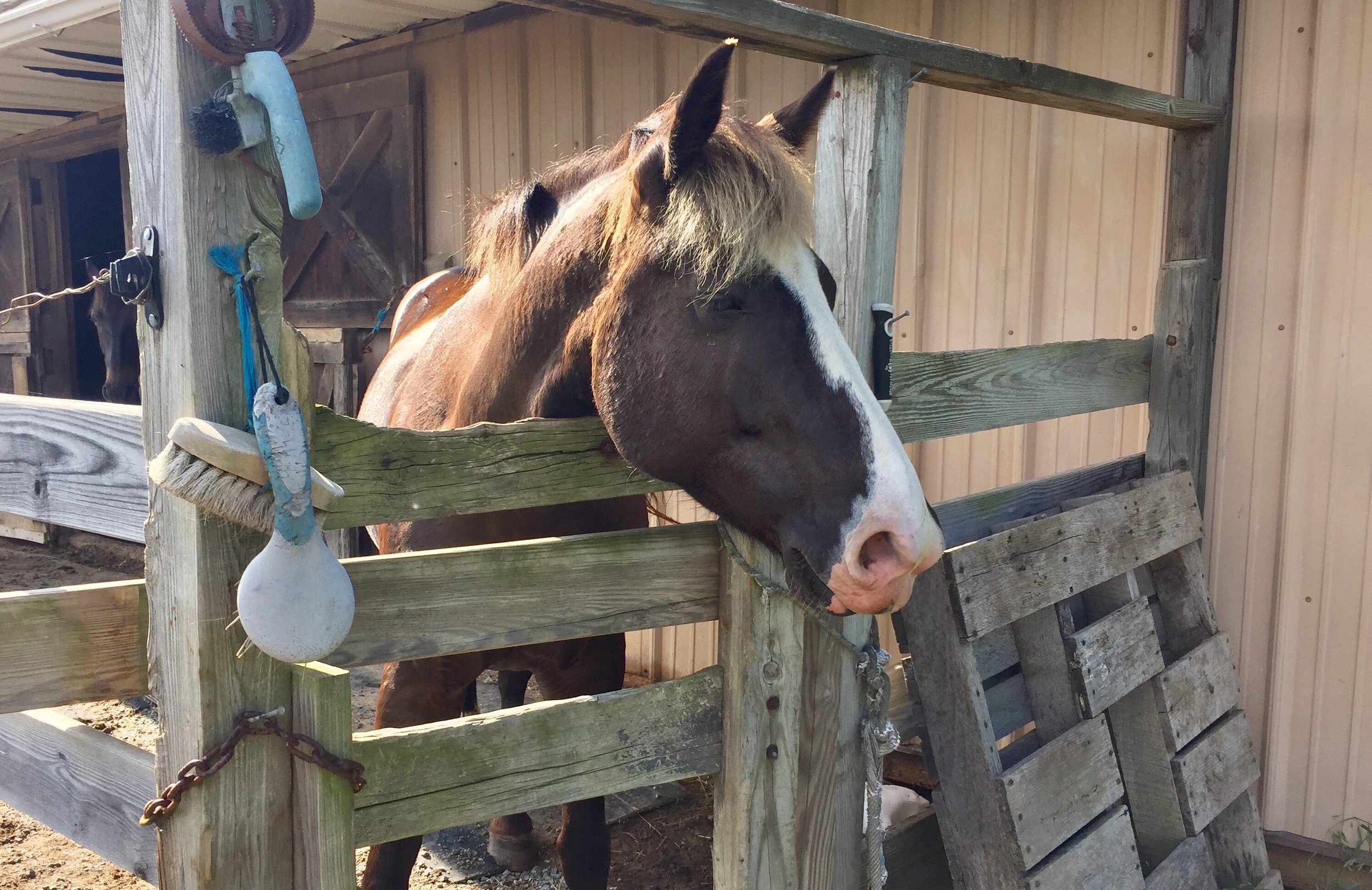 Misty and 3 other horses are part of the family.