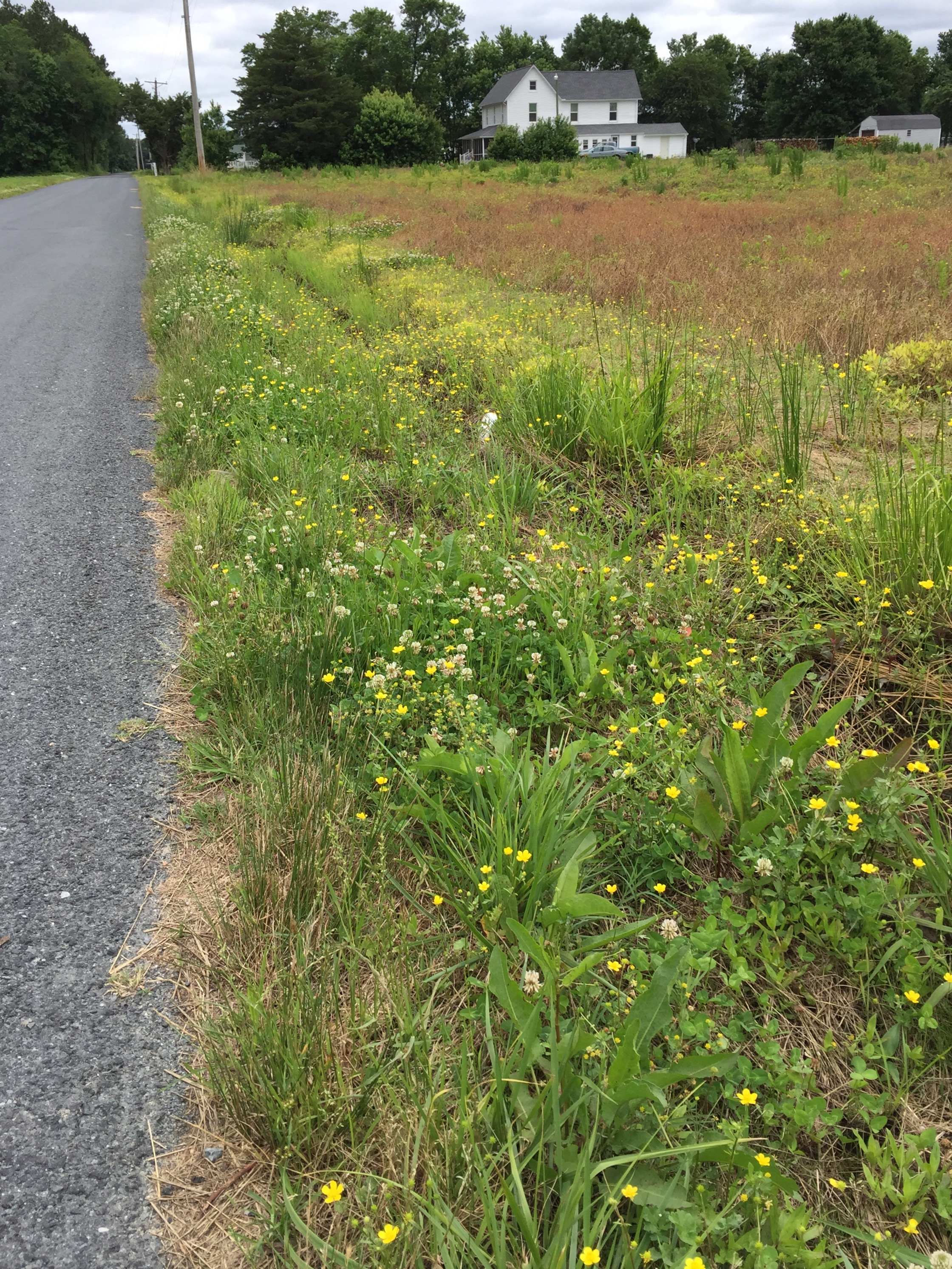 I want to remember the simple things, like wild flowers all along the narrow, shallow ditches. Bike riding in the country is a constant reminder of the importance of farming to our nation.