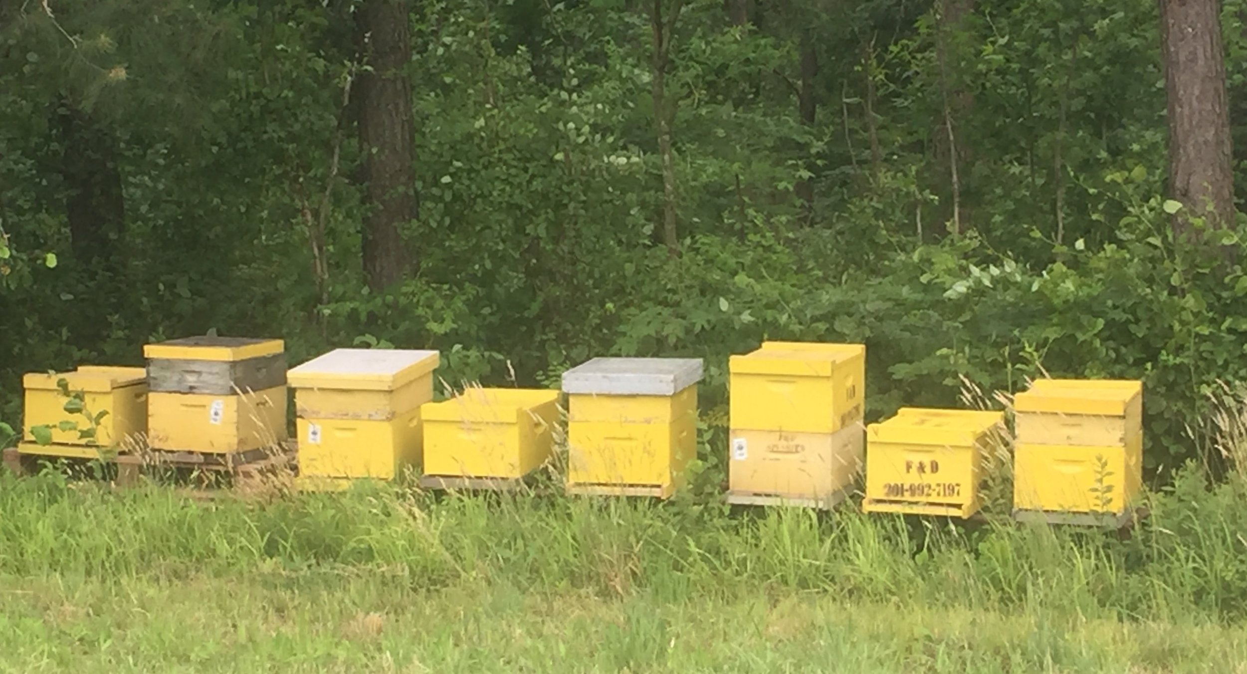 Beehives in yellow.