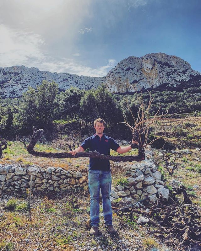 Vine probation happening in the vineyard. However we decided to chop this on, sucking up to much energy to the main vine... bit of a beast. . . . . #growing #outdoors #air #wine #winetasting #winelover #climbing #clouds #sun #vines #france #roussillon #fresh #long #wino #winestagram #winestorage #steep #winewinewine #winemaking #wineblogger #wineporn #vineyardviews