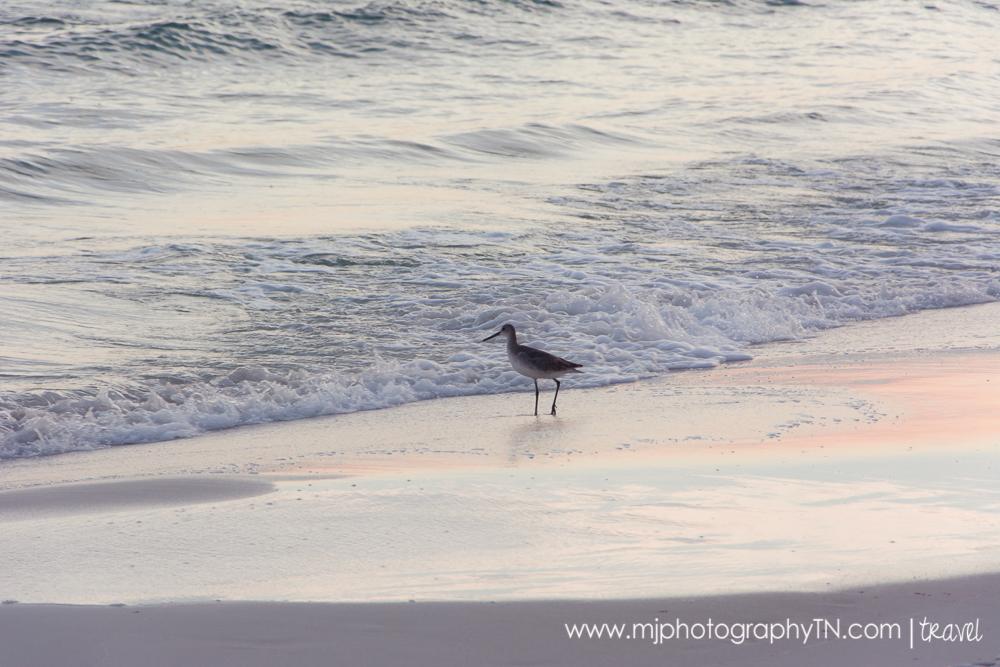 09.15.08 Seagrove Beach FL Vacation-8.JPG