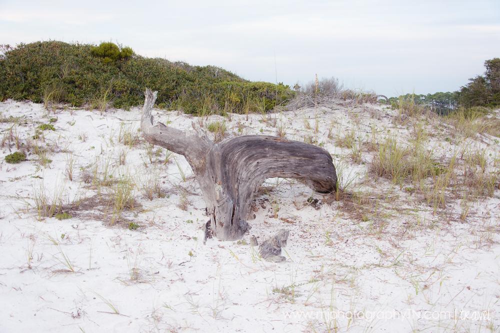 09.15.08 Seagrove Beach FL Vacation-26.JPG