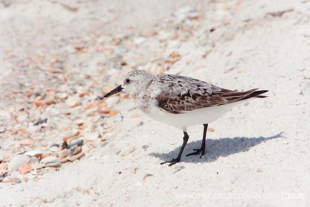 09.15.08 Seagrove Beach FL Vacation-39.JPG
