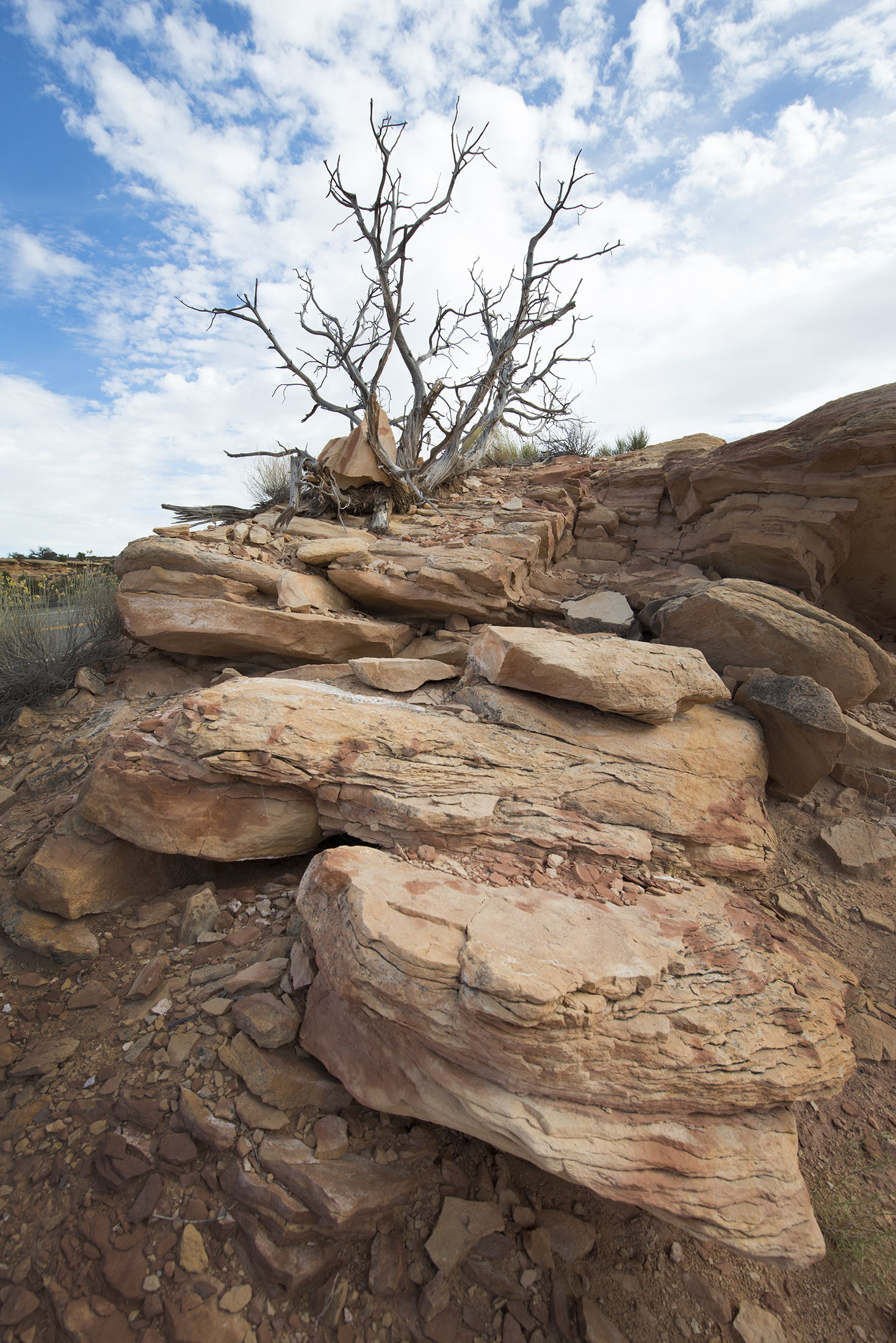 Needles Rock Tree.jpg