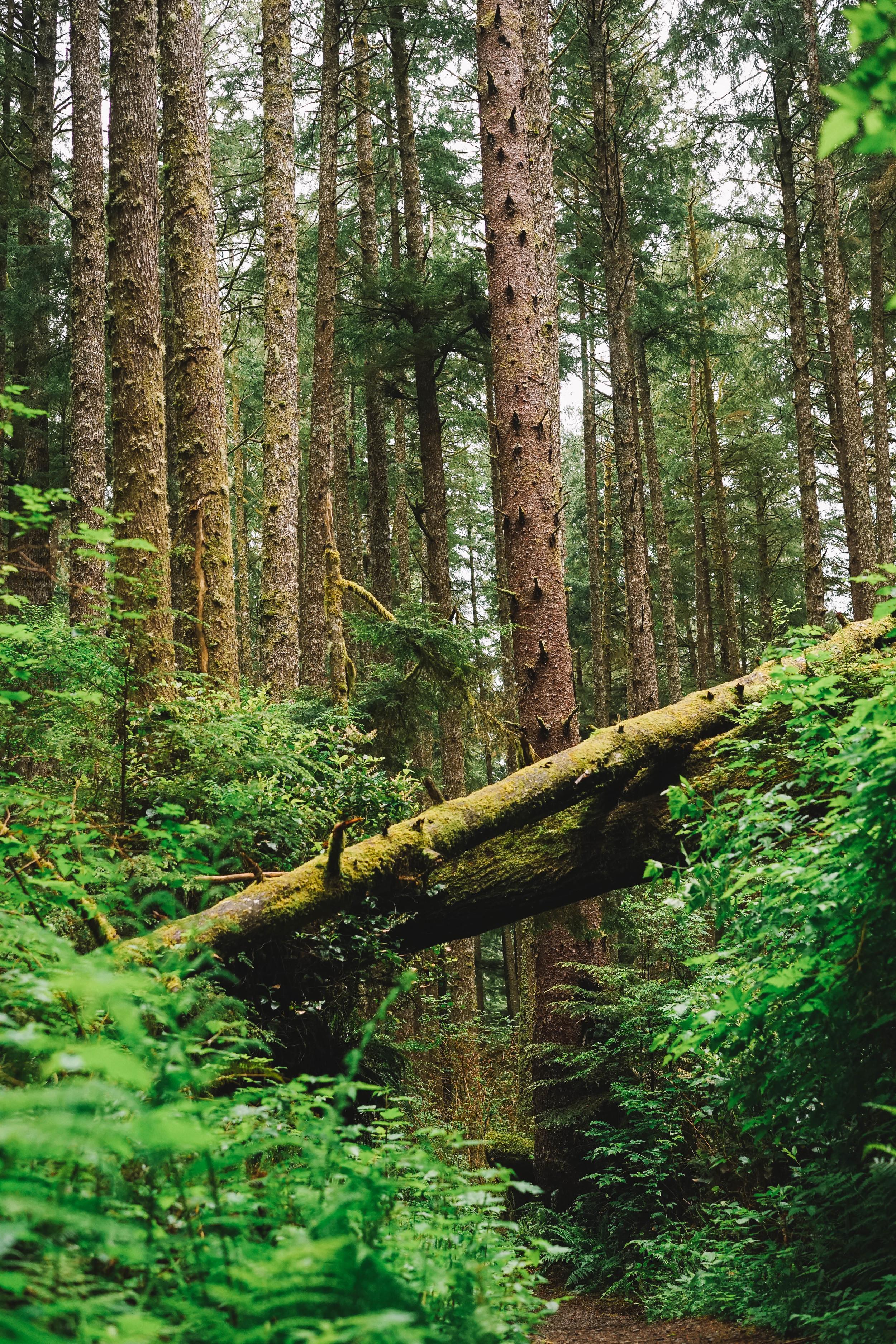 Trees5 (1 of 1).jpg