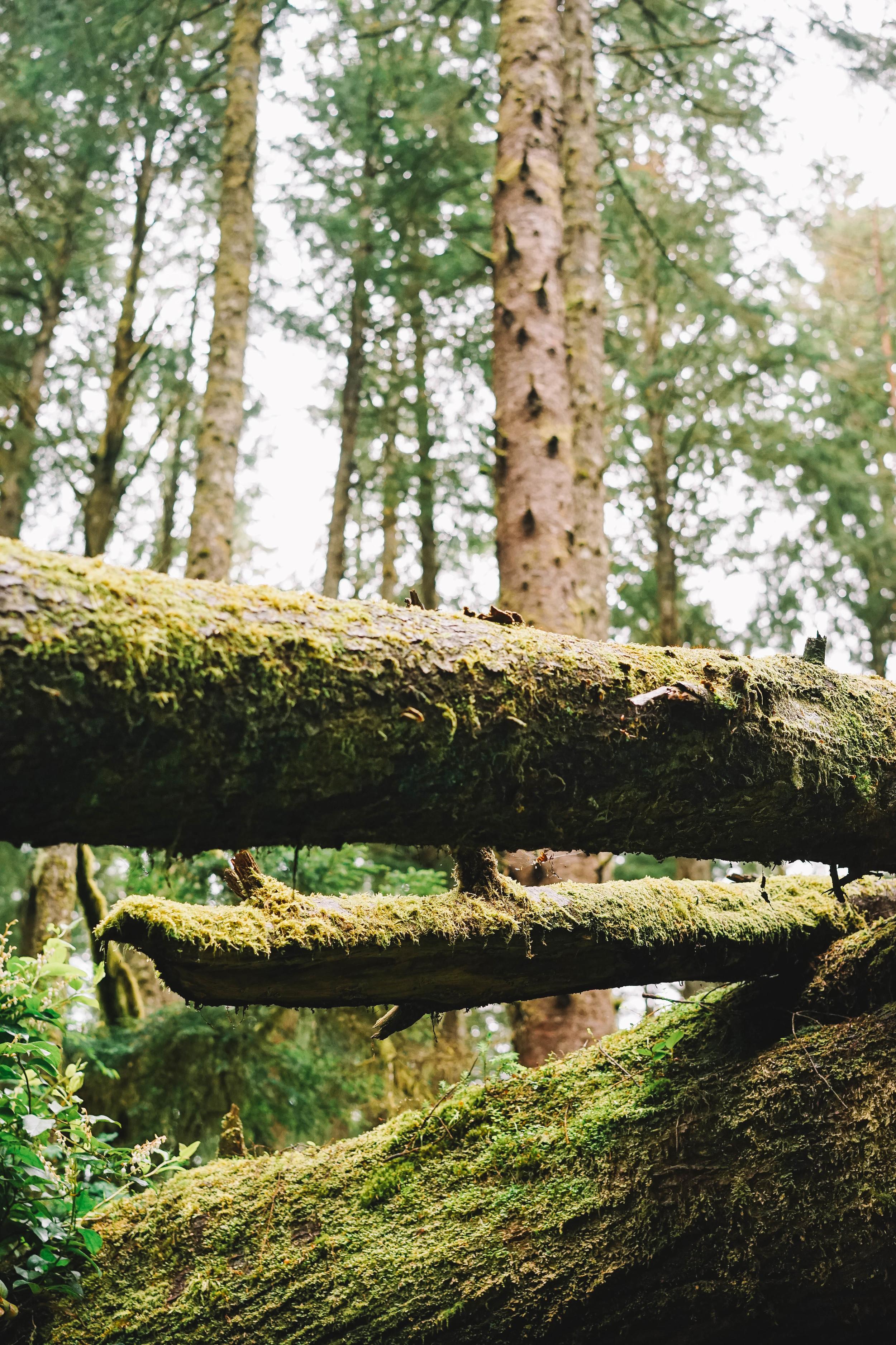 Trees3 (1 of 1).jpg