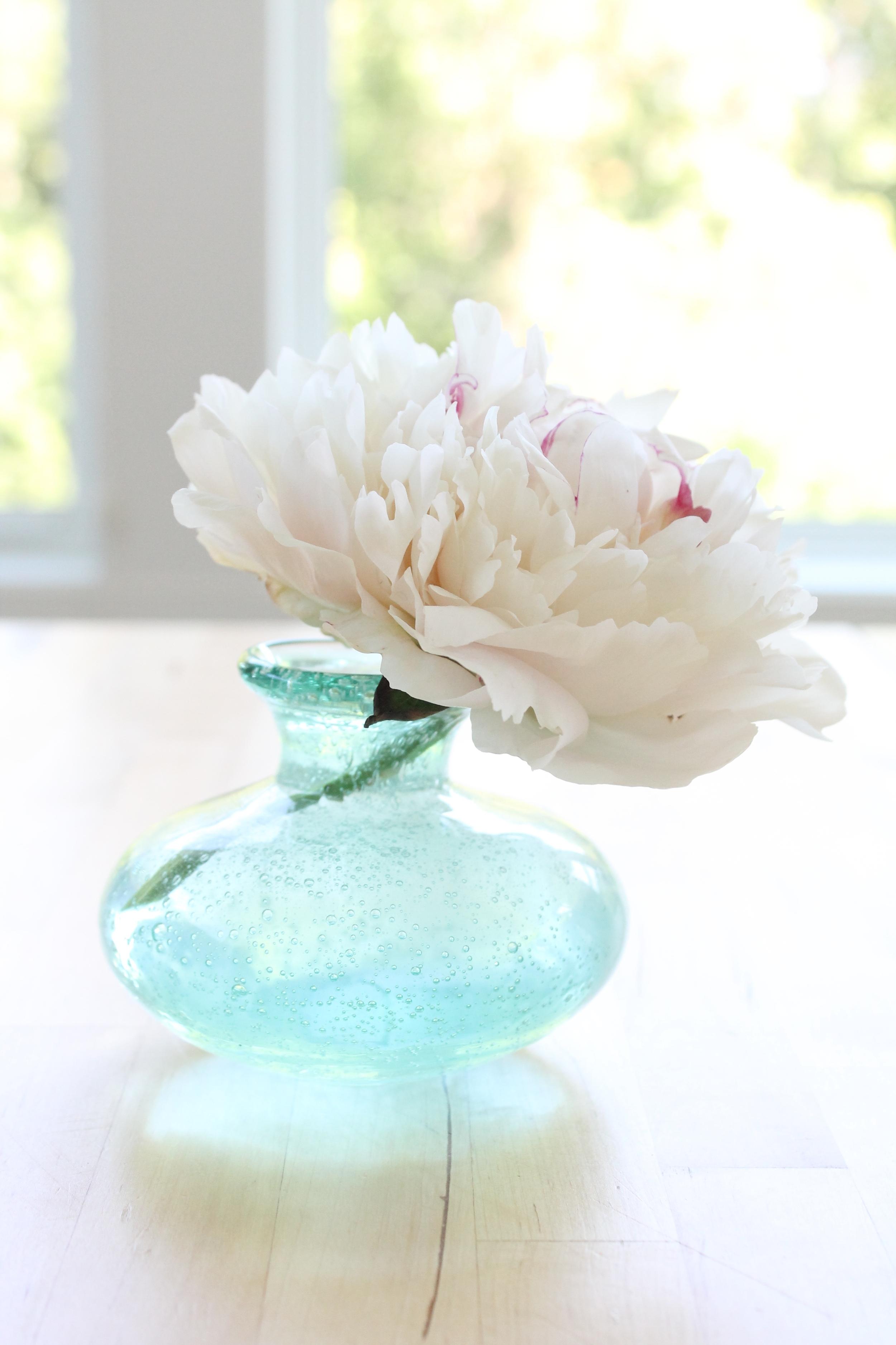 Peony in aqua bud vase.