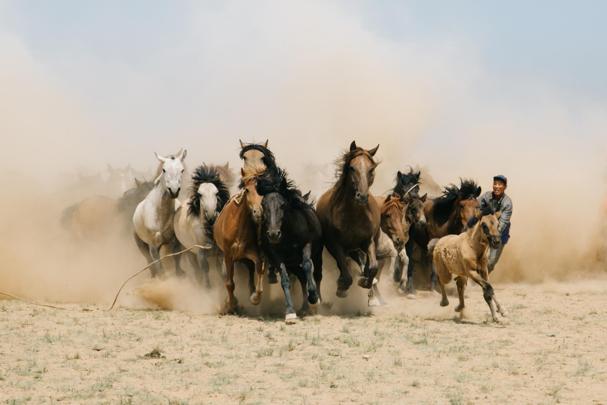 ellamackphotos_website_landscapes_mongolia_horses.jpg