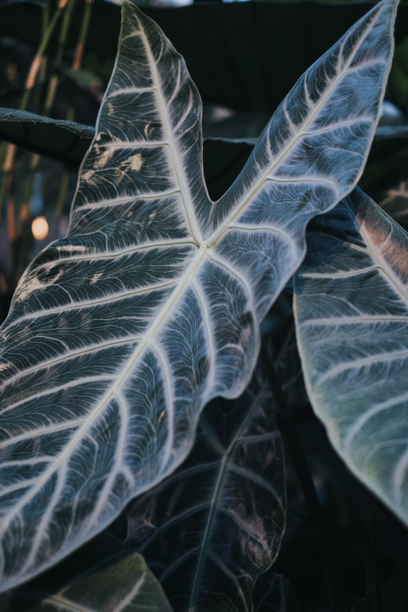 ellamackphotos_Cynthia_plants-3.jpg