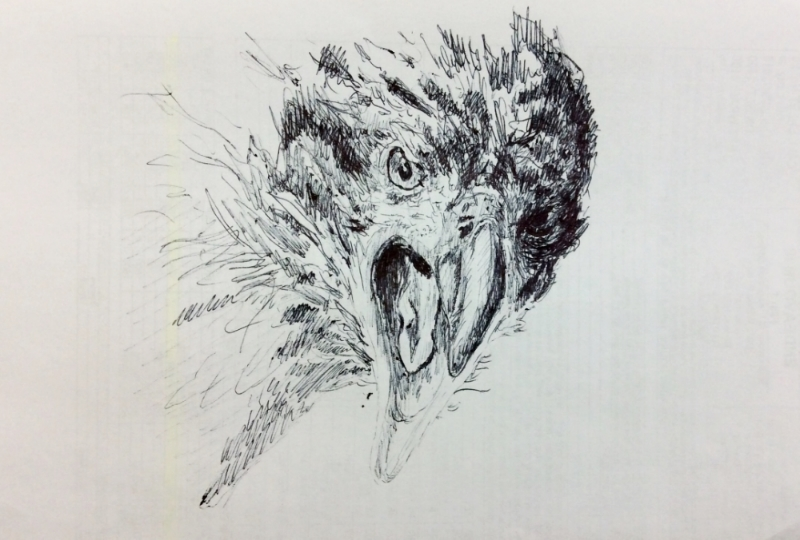 """Endeavour the Eagle"" (2015)"