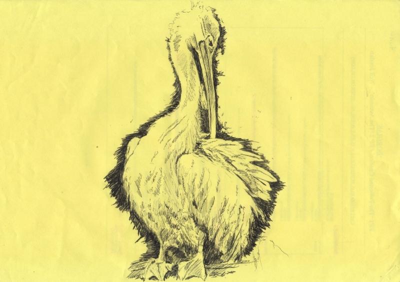 """""""Pelican"""" (2010)"""