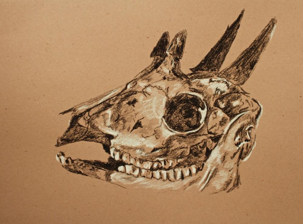 """""""Four-Horned Antelope Skull"""" (2015)"""