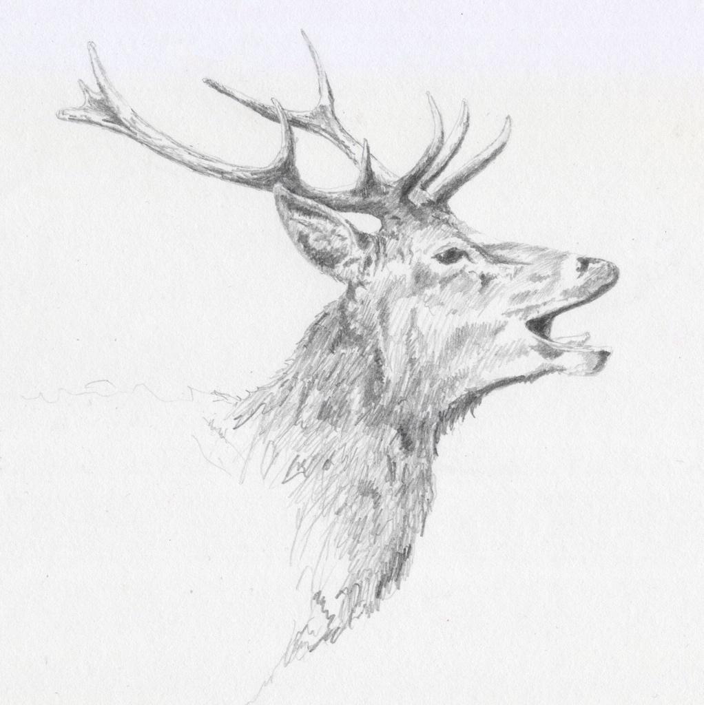 """""""Second study of Richmond Deer"""" (2015)"""