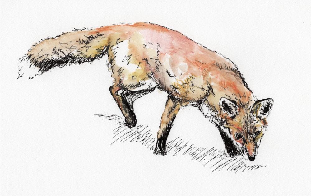 """""""Big Fox"""" (2016)"""