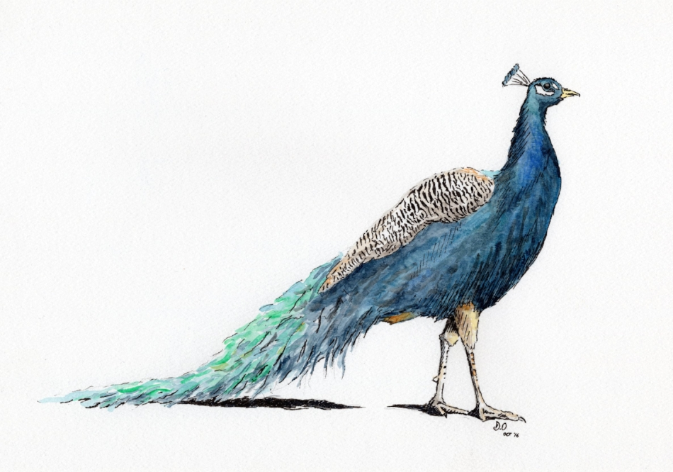 """F___'s Peacock"" (2016)"