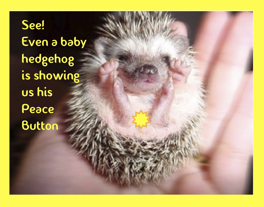Hedgehogs have Peace Button's too...