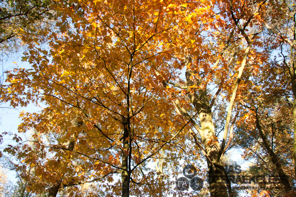 2010 okt 31 - 16u 26min 38s.jpg