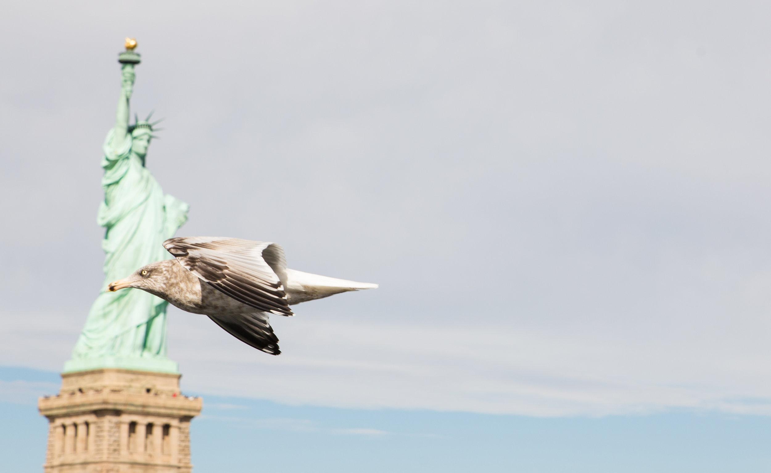 USA 2017 TODAS BIRD-1.jpg